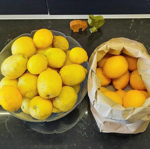 insta-lemon.jpeg