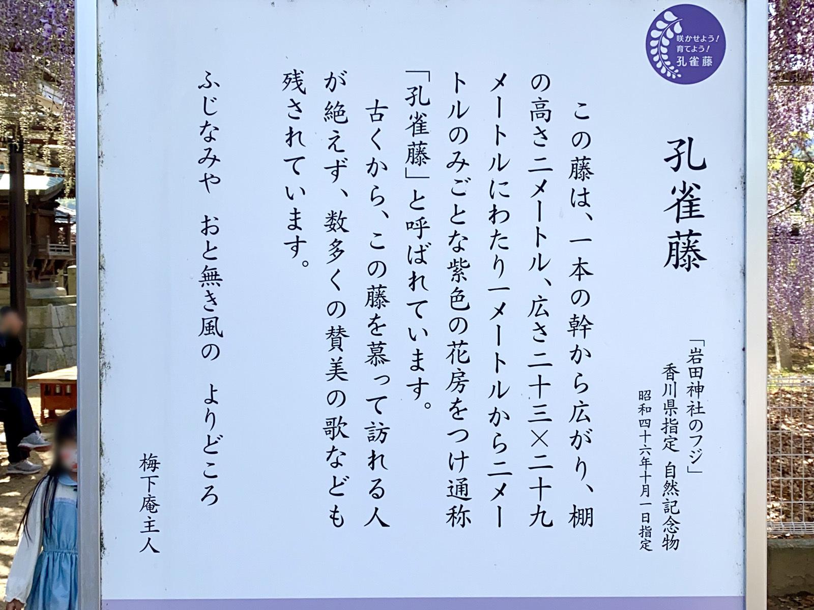 岩田神社 03 孔雀藤開設