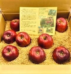 20211002紅玉りんご