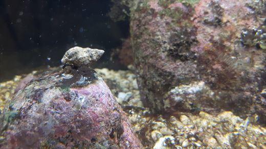 最近の海水魚水槽 (2)